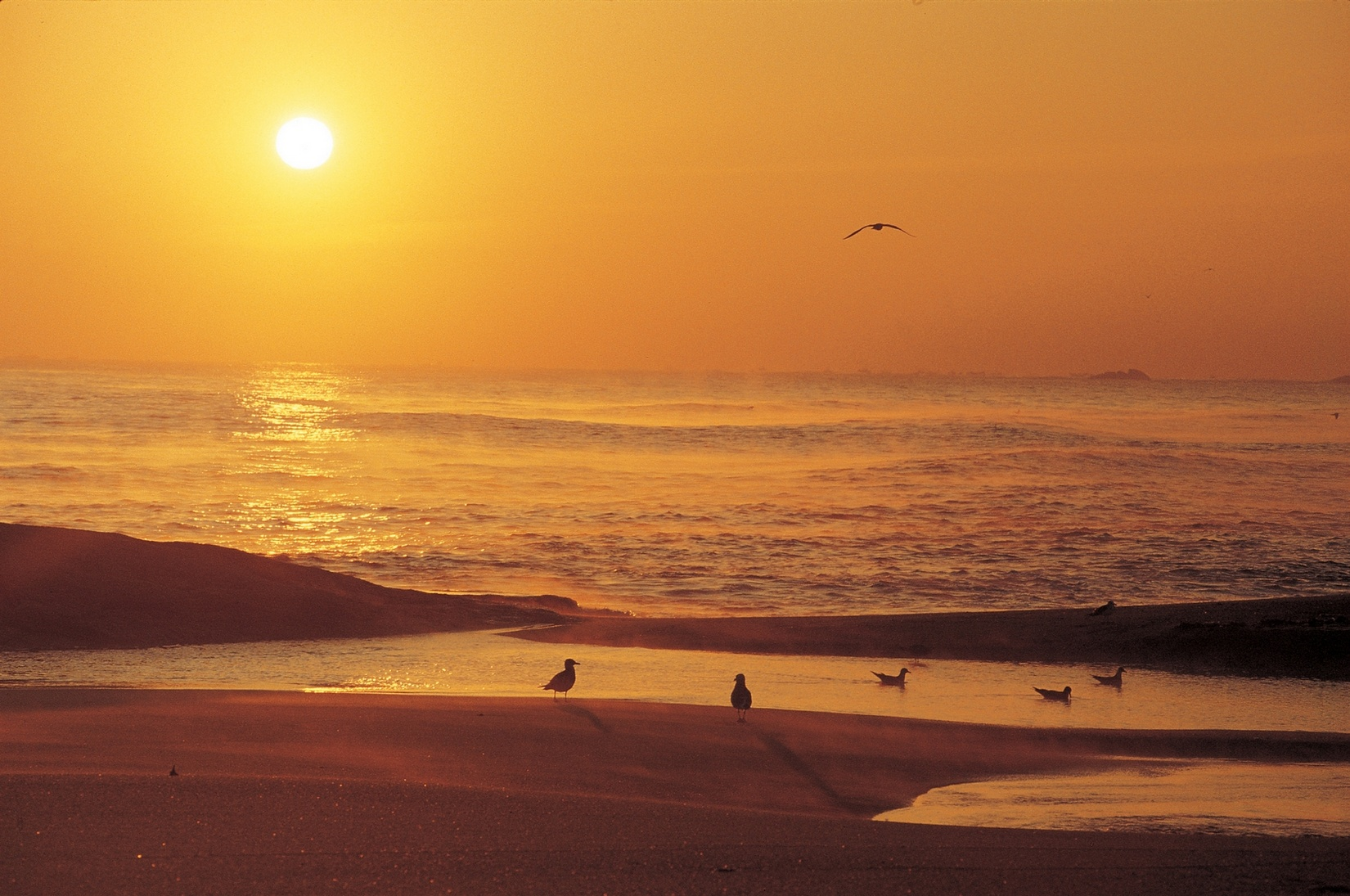 Free download high resolution image - free image free photo free stock image public domain picture -coucher de soleil coloré à la banque de la plage avec des silhouettes d'oiseaux