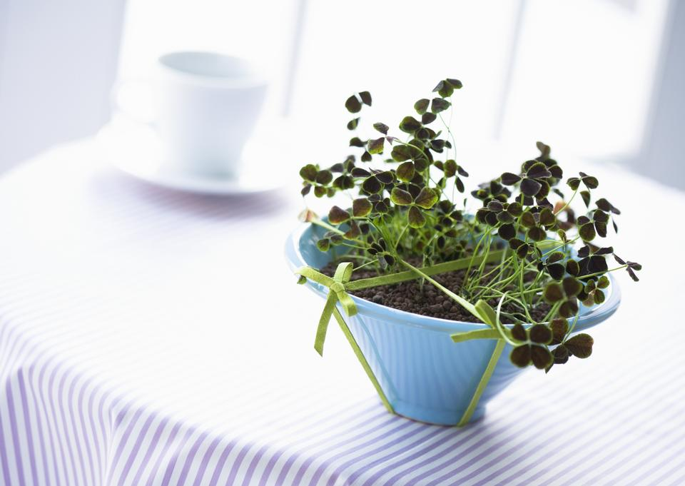 Free download high resolution image - free image free photo free stock image public domain picture  Indoor plant in vase on table