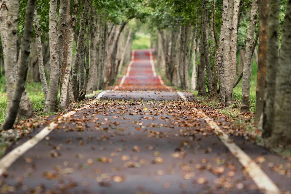 Road in autumn forest. Beauty nature background