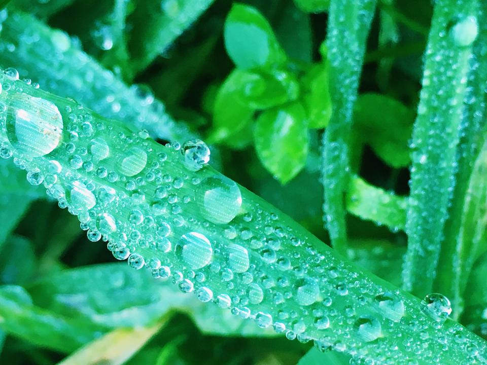 Green leaf with water drops for background