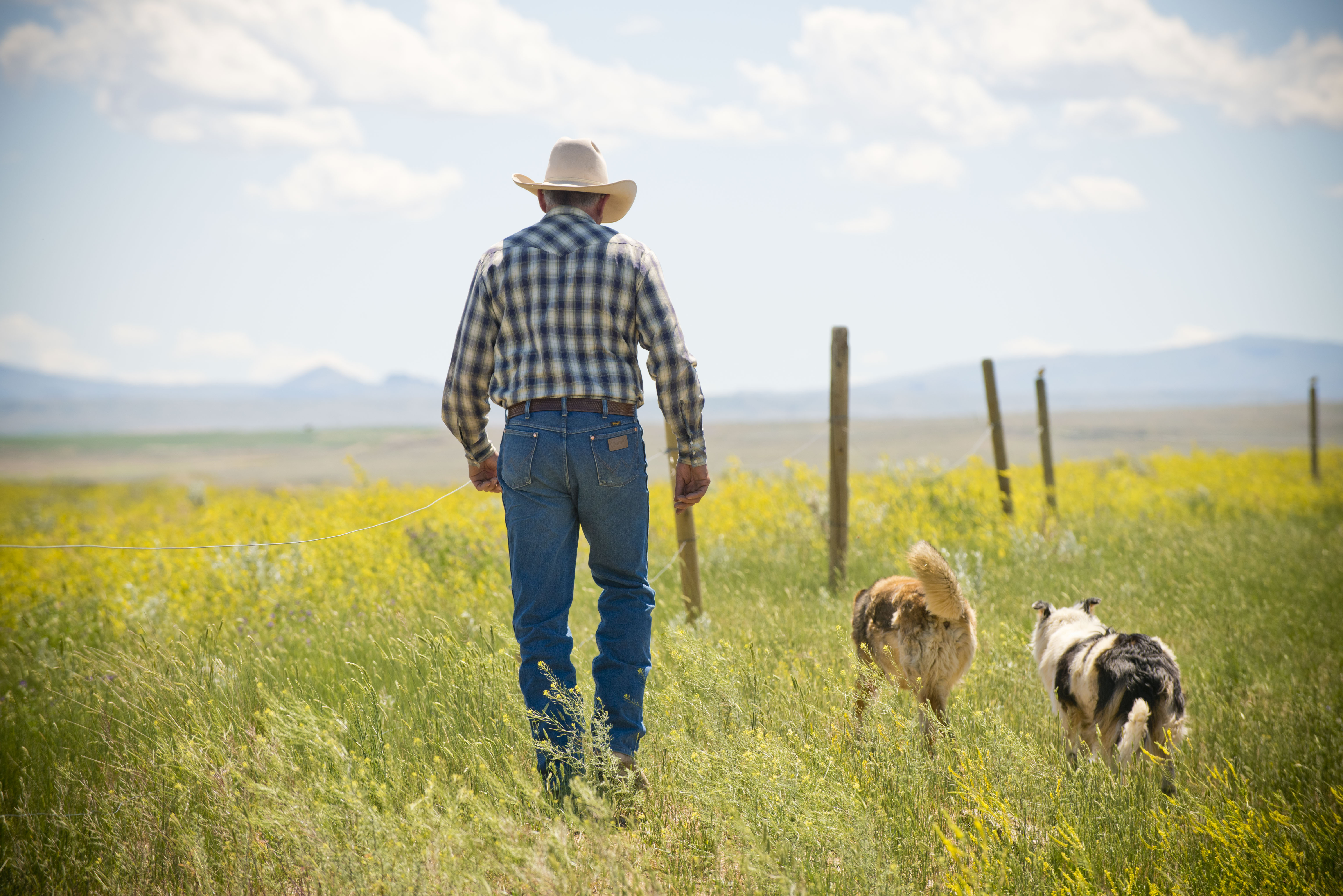 Free download high resolution image - free image free photo free stock image public domain picture -cowboy man and his dog