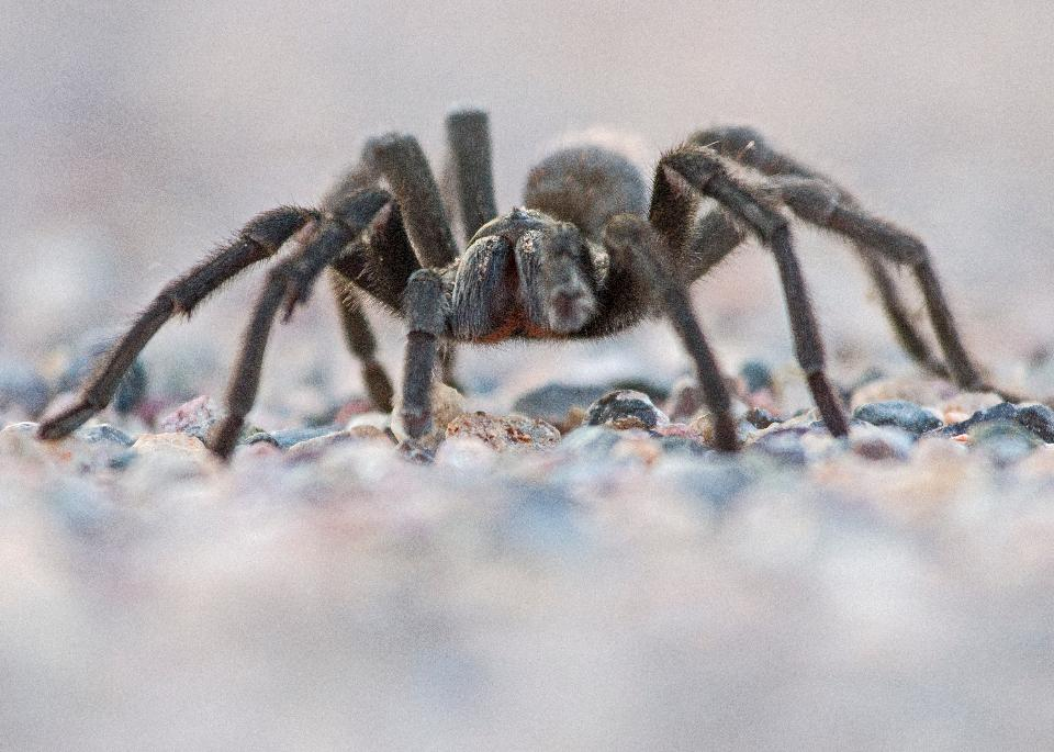 Free download high resolution image - free image free photo free stock image public domain picture  Spider On Rock Close up