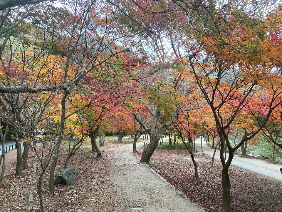 Free download high resolution image - free image free photo free stock image public domain picture  Fall Foliage Naejangsan National Park