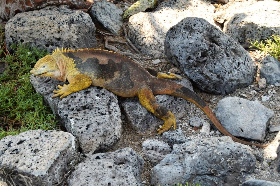 Free download high resolution image - free image free photo free stock image public domain picture  Wild lizard crawling on rocks