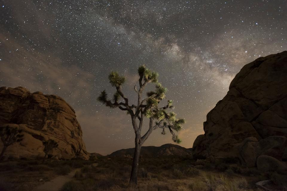 Free download high resolution image - free image free photo free stock image public domain picture  Night sky of Joshua Tree National Park