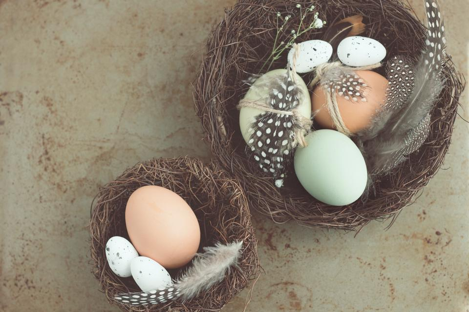 Free download high resolution image - free image free photo free stock image public domain picture  easter