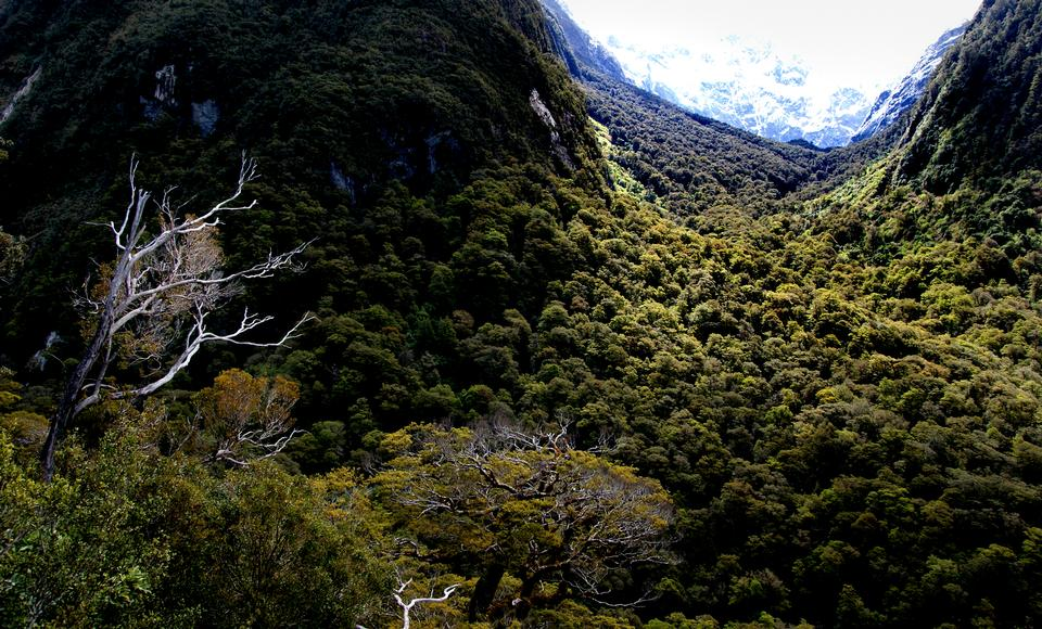 Free download high resolution image - free image free photo free stock image public domain picture  Marian Valley Fiordland Nationalpark