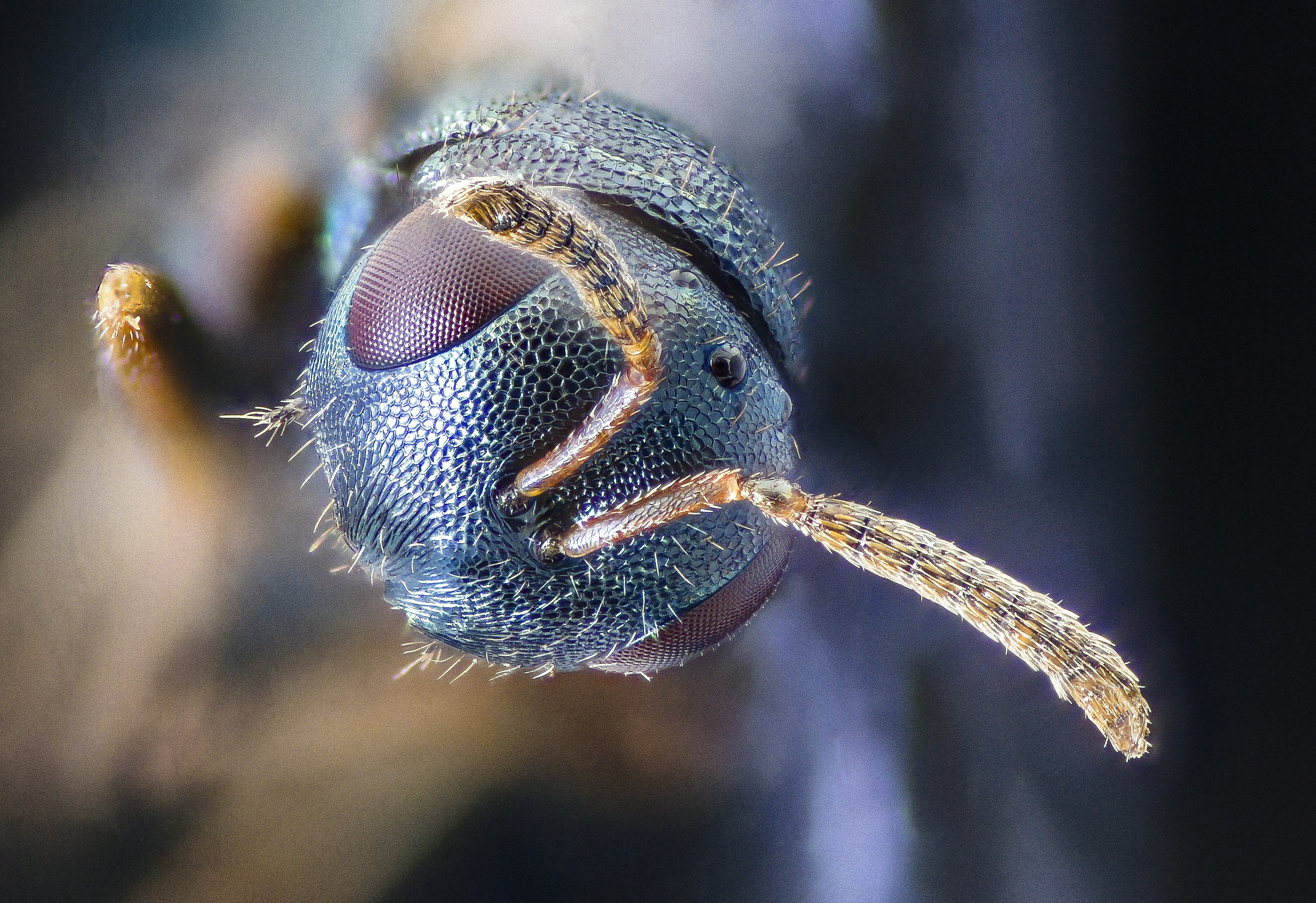 Free download high resolution image - free image free photo free stock image public domain picture -small wasp head